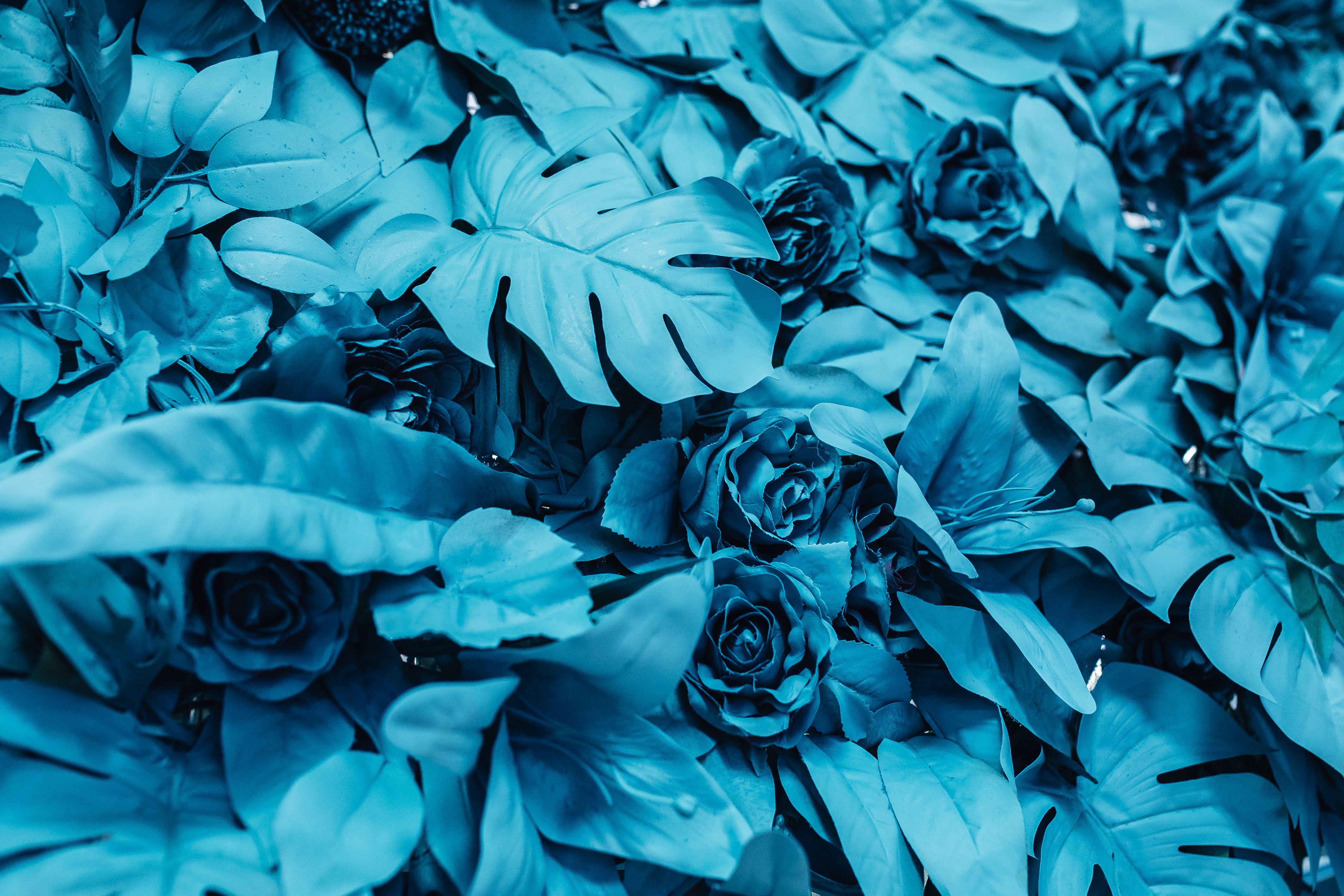 74563 обои 1080x2400 на телефон бесплатно, скачать картинки Голубой, Розы, Цветы, Листья, Краска 1080x2400 на мобильный