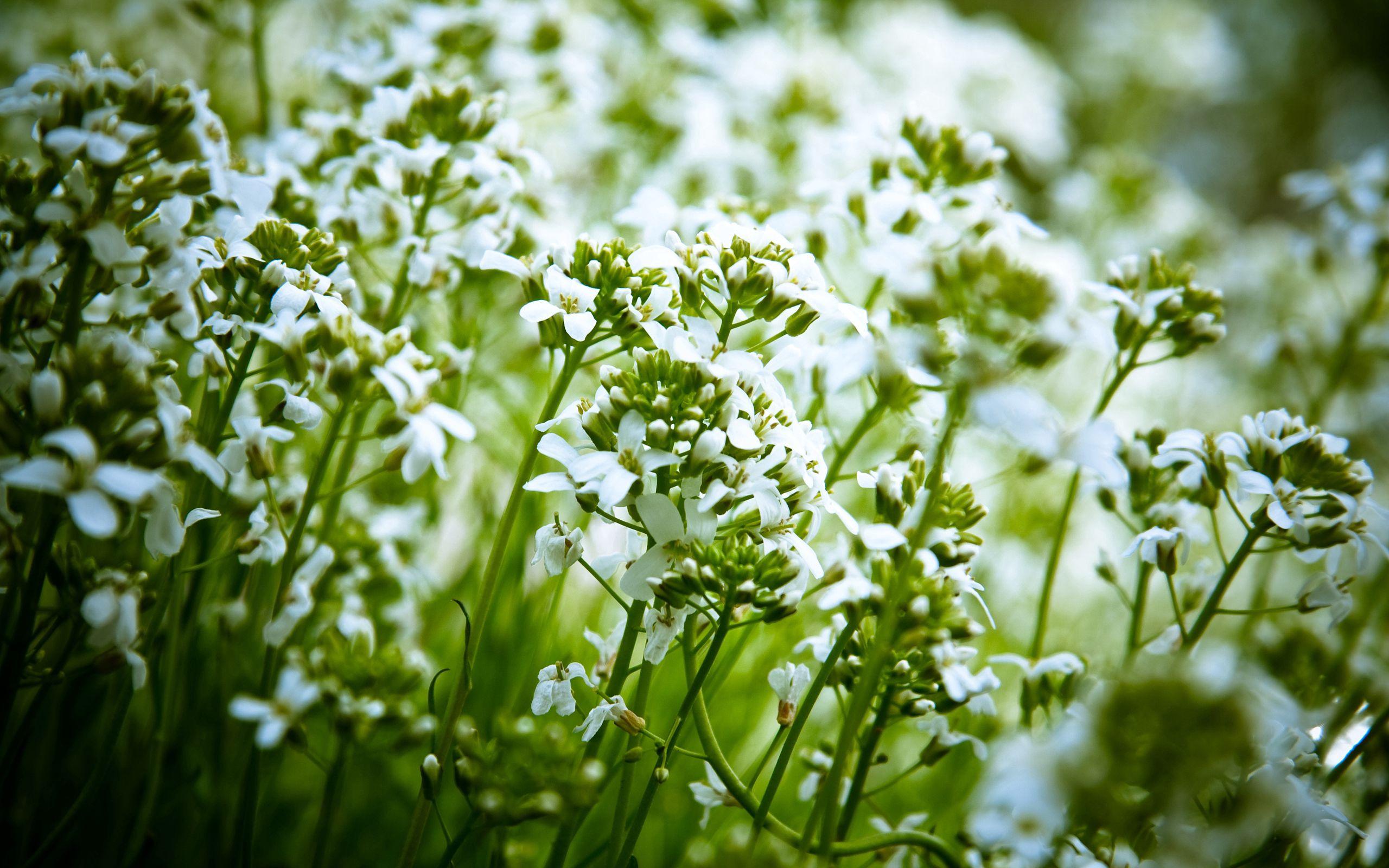 142139 скачать обои Цветы, Природа, Растения - заставки и картинки бесплатно