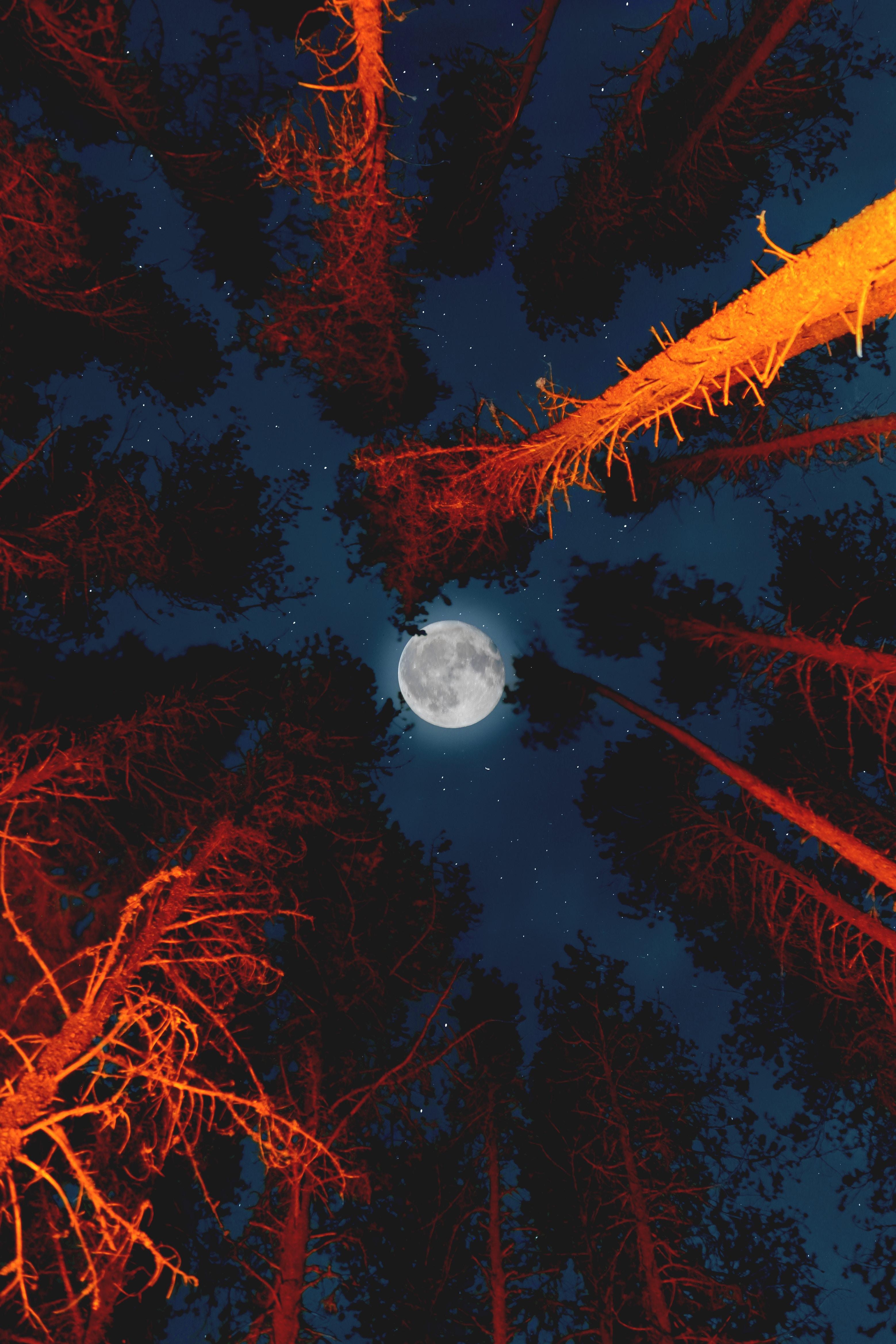 65649 Hintergrundbild 480x800 kostenlos auf deinem Handy, lade Bilder Natur, Bäume, Mond, Scheinen, Licht, Vollmond, Untersicht, Untere Ansicht 480x800 auf dein Handy herunter
