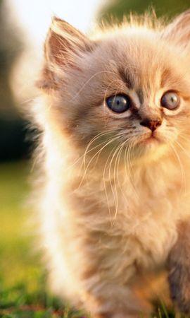 47570 завантажити шпалери Тварини, Кішки - заставки і картинки безкоштовно