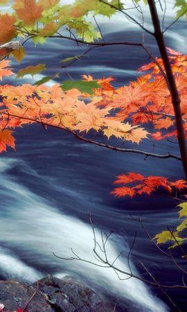 4998 скачать обои Пейзаж, Вода, Осень, Листья - заставки и картинки бесплатно
