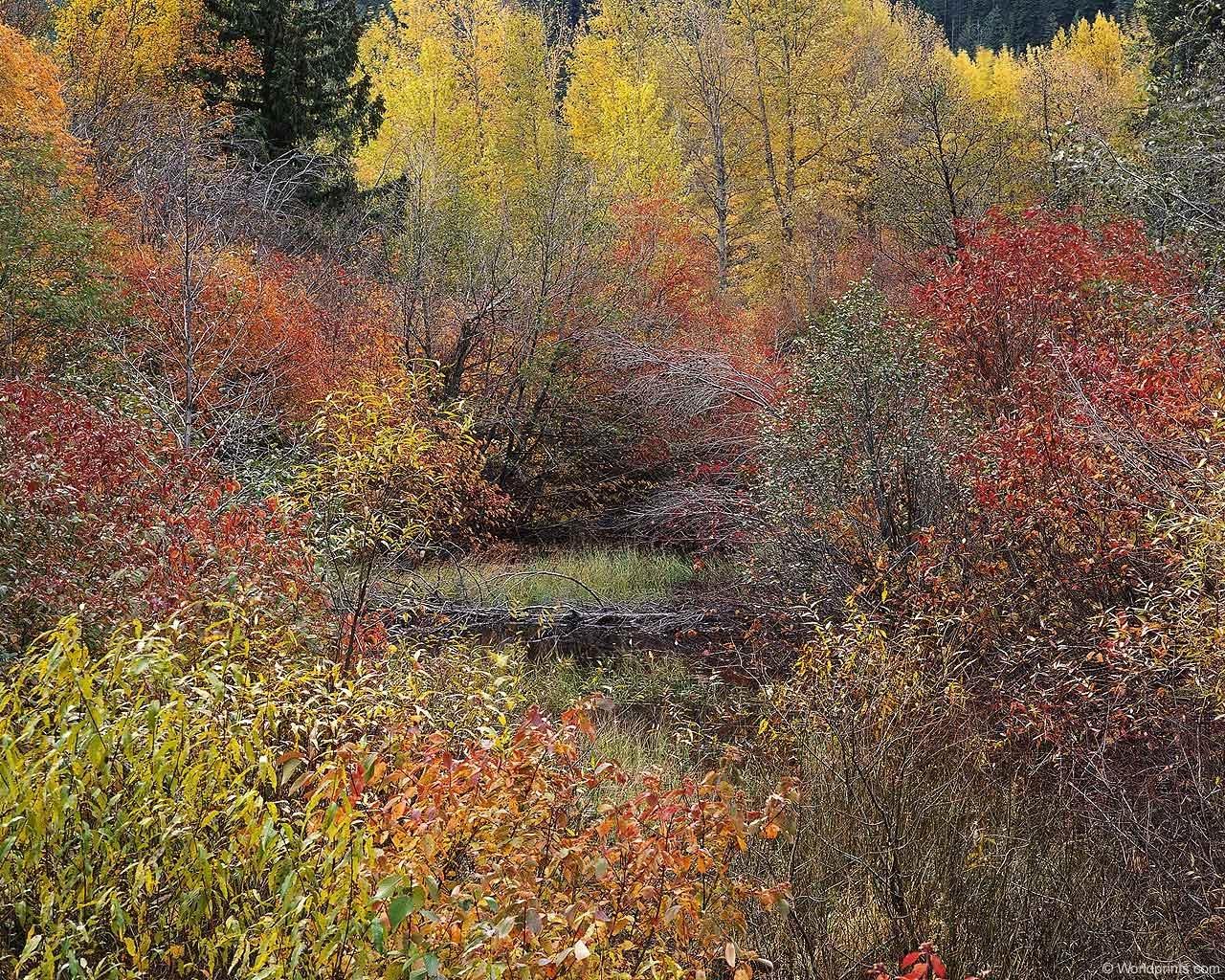 7663 скачать обои Пейзаж, Деревья, Осень - заставки и картинки бесплатно