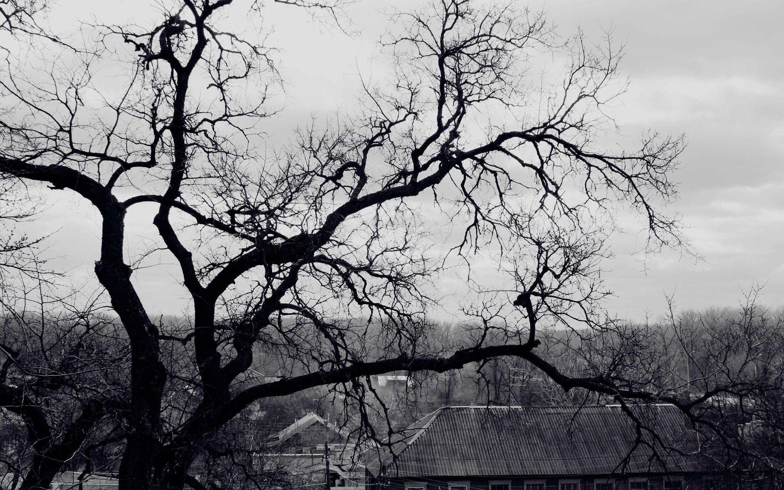 68587 baixar papel de parede Natureza, Madeira, Árvore, Galhos, Ramo, Preto E Branco, Cobertura, Telhado, Arrepiante, Assustador, Sombrio - protetores de tela e imagens gratuitamente
