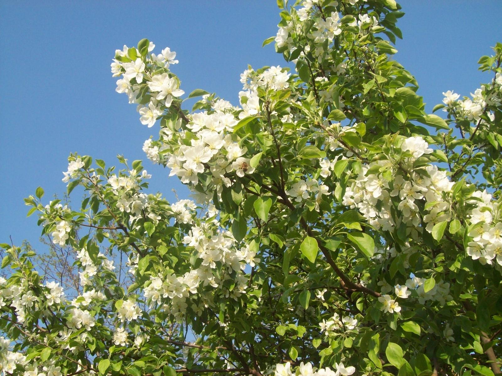 7881 скачать обои Растения, Цветы, Листья - заставки и картинки бесплатно