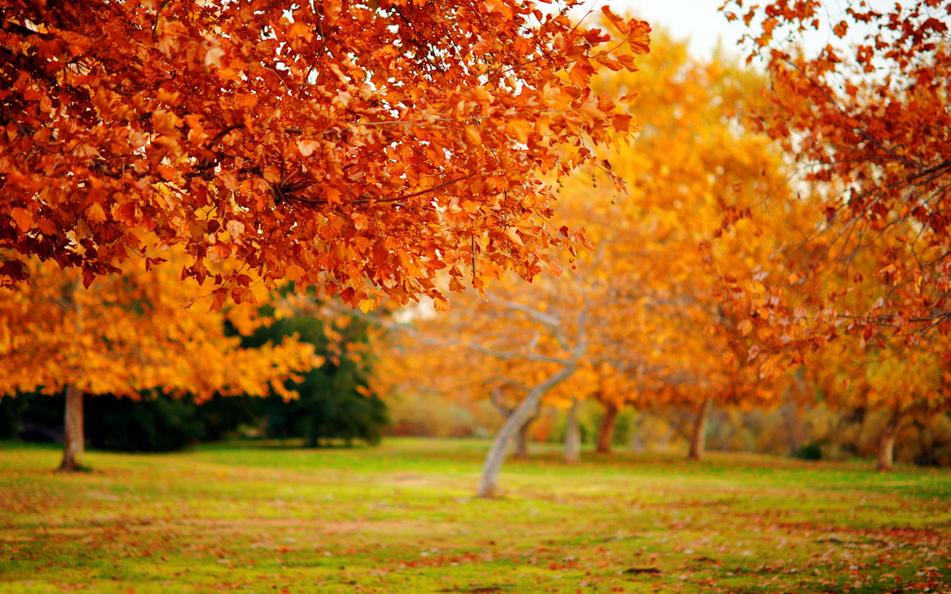 26126 скачать обои Пейзаж, Деревья, Осень, Листья - заставки и картинки бесплатно