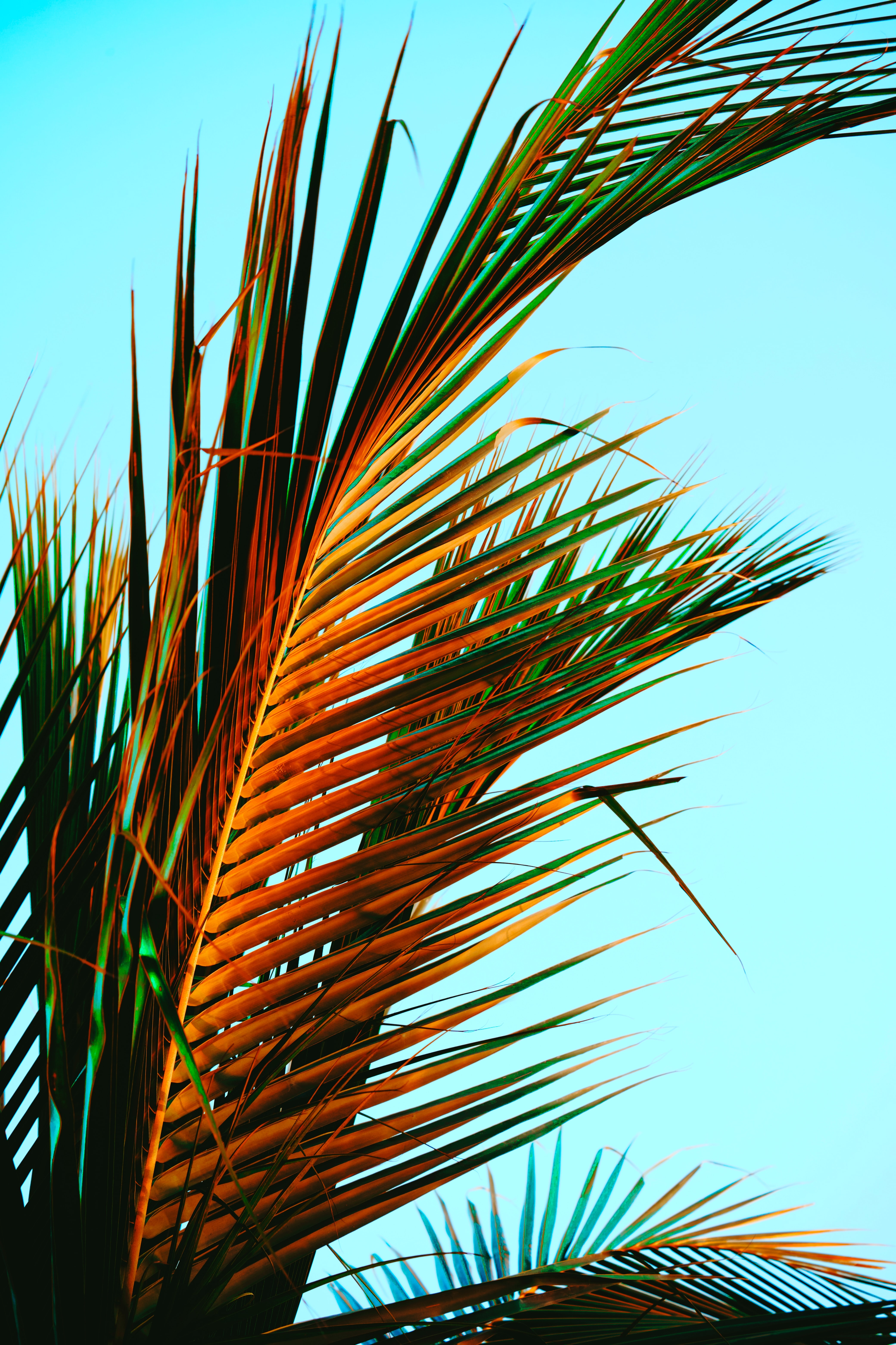 146813 download wallpaper Nature, Palm Leaves, Palm, Leaves, Tropics screensavers and pictures for free