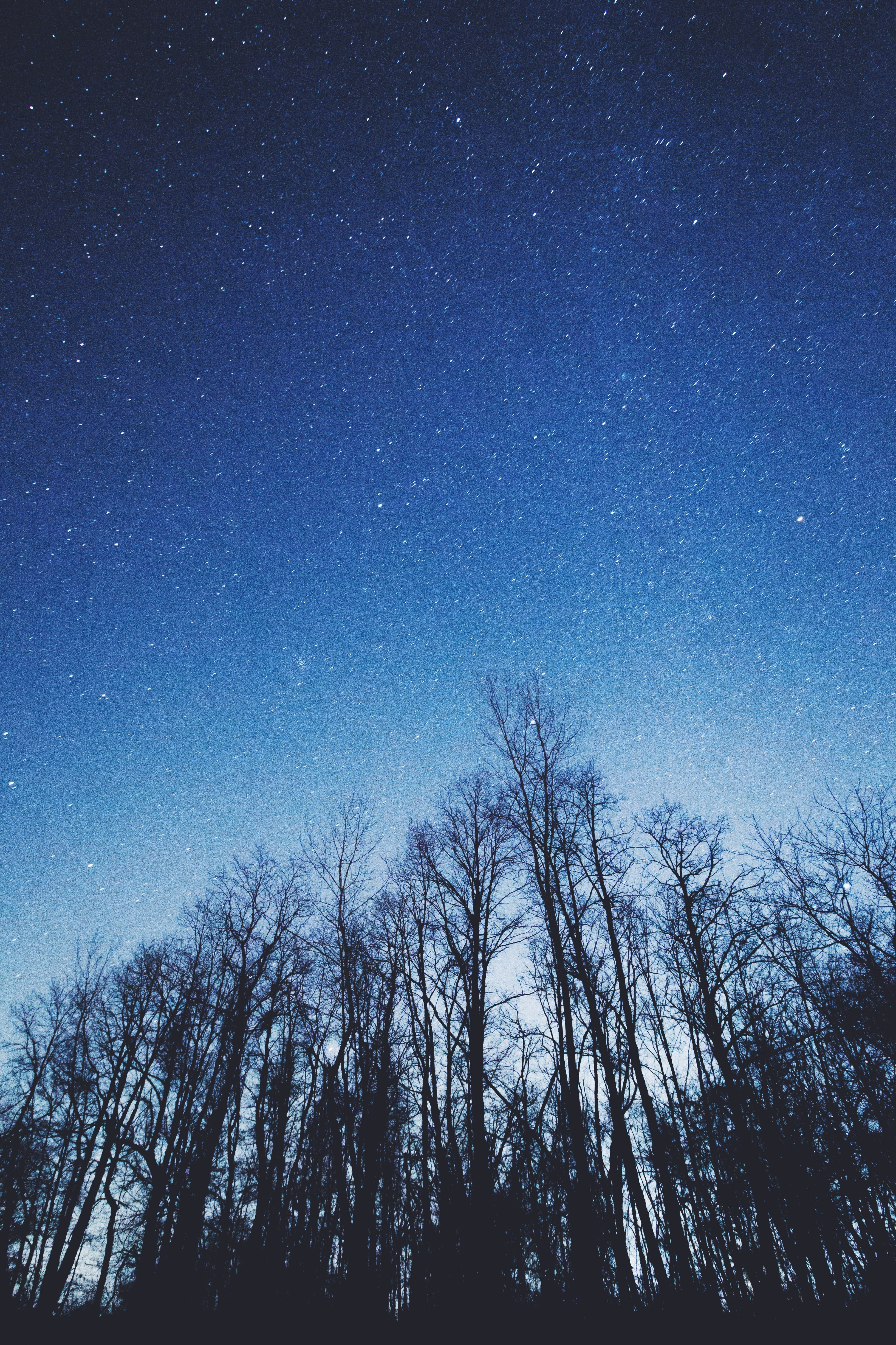 107594 download wallpaper Starry Sky, Nature, Trees, Sky, Night screensavers and pictures for free