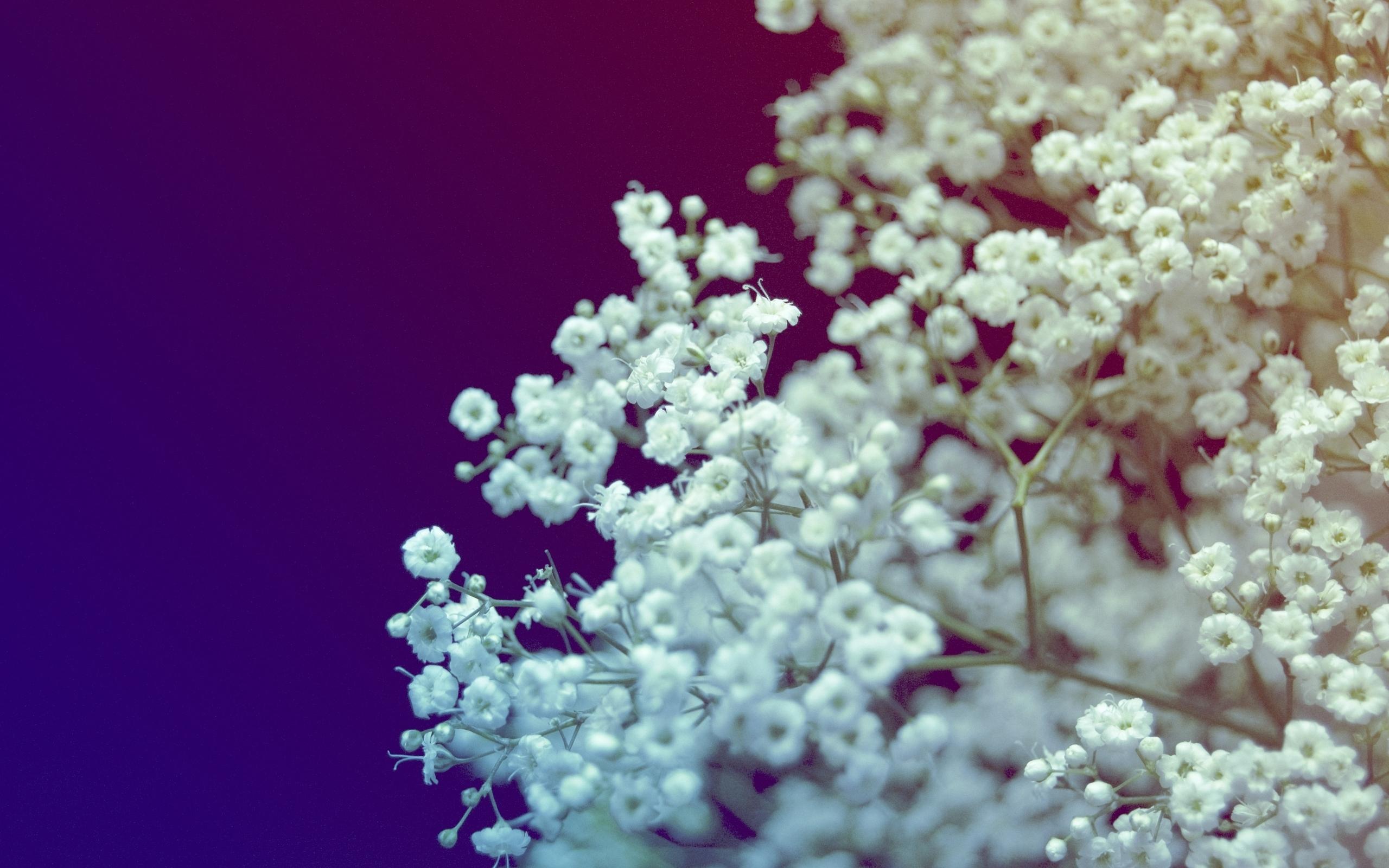 12519 скачать обои Растения, Цветы - заставки и картинки бесплатно