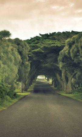 24955 скачать обои Пейзаж, Деревья, Дороги - заставки и картинки бесплатно