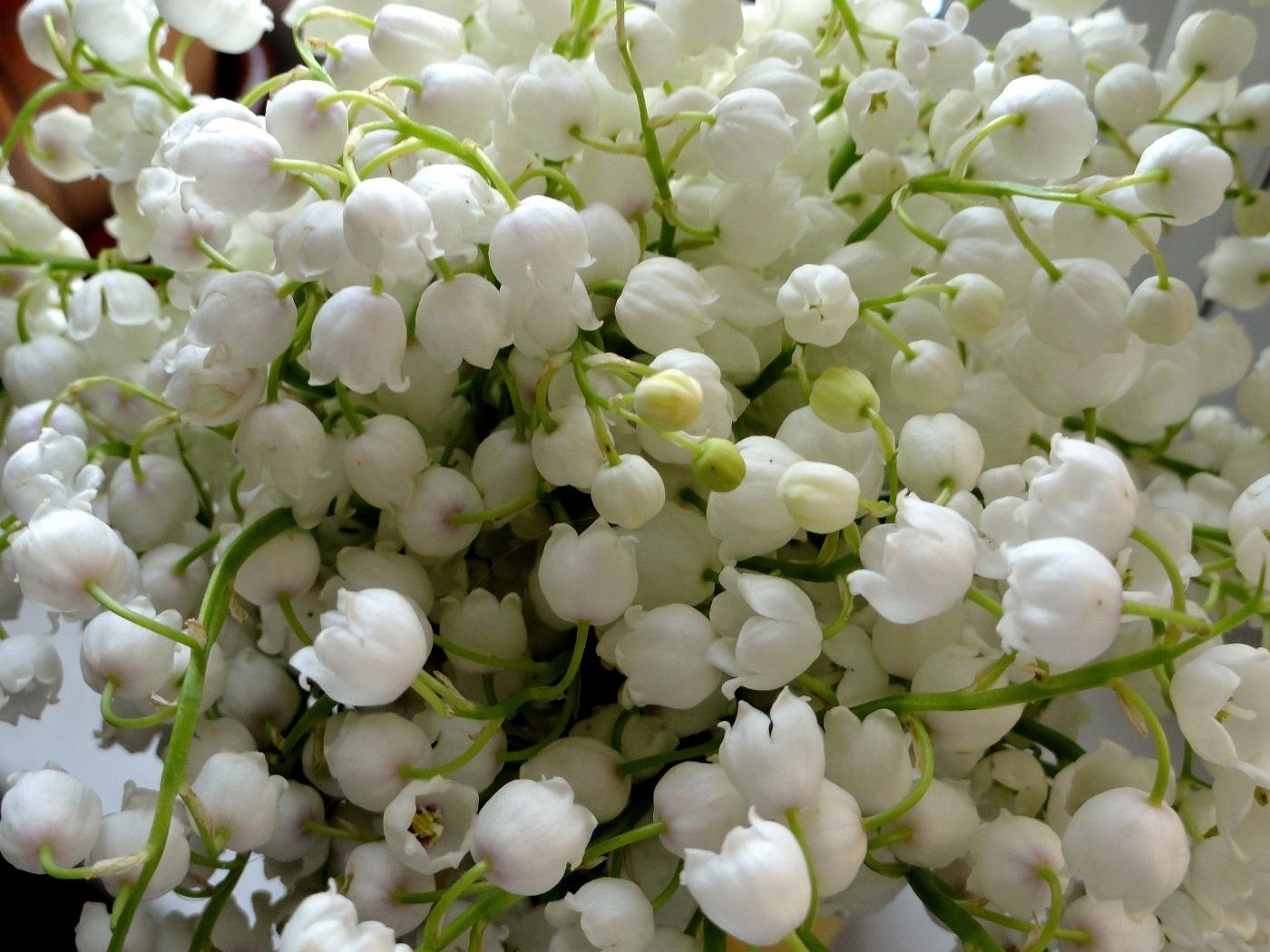 25045 скачать обои Ландыши, Растения, Цветы - заставки и картинки бесплатно