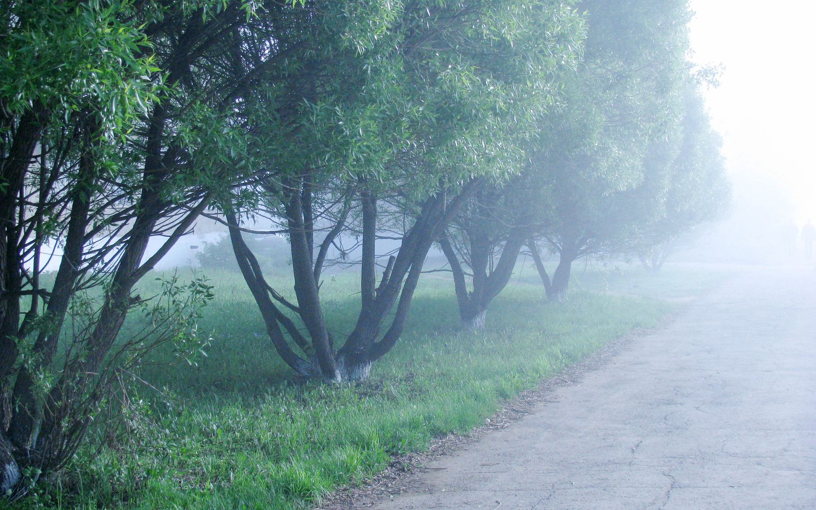 91765 download wallpaper Nature, Fog, Trees, Morning, Cool, Coolness screensavers and pictures for free