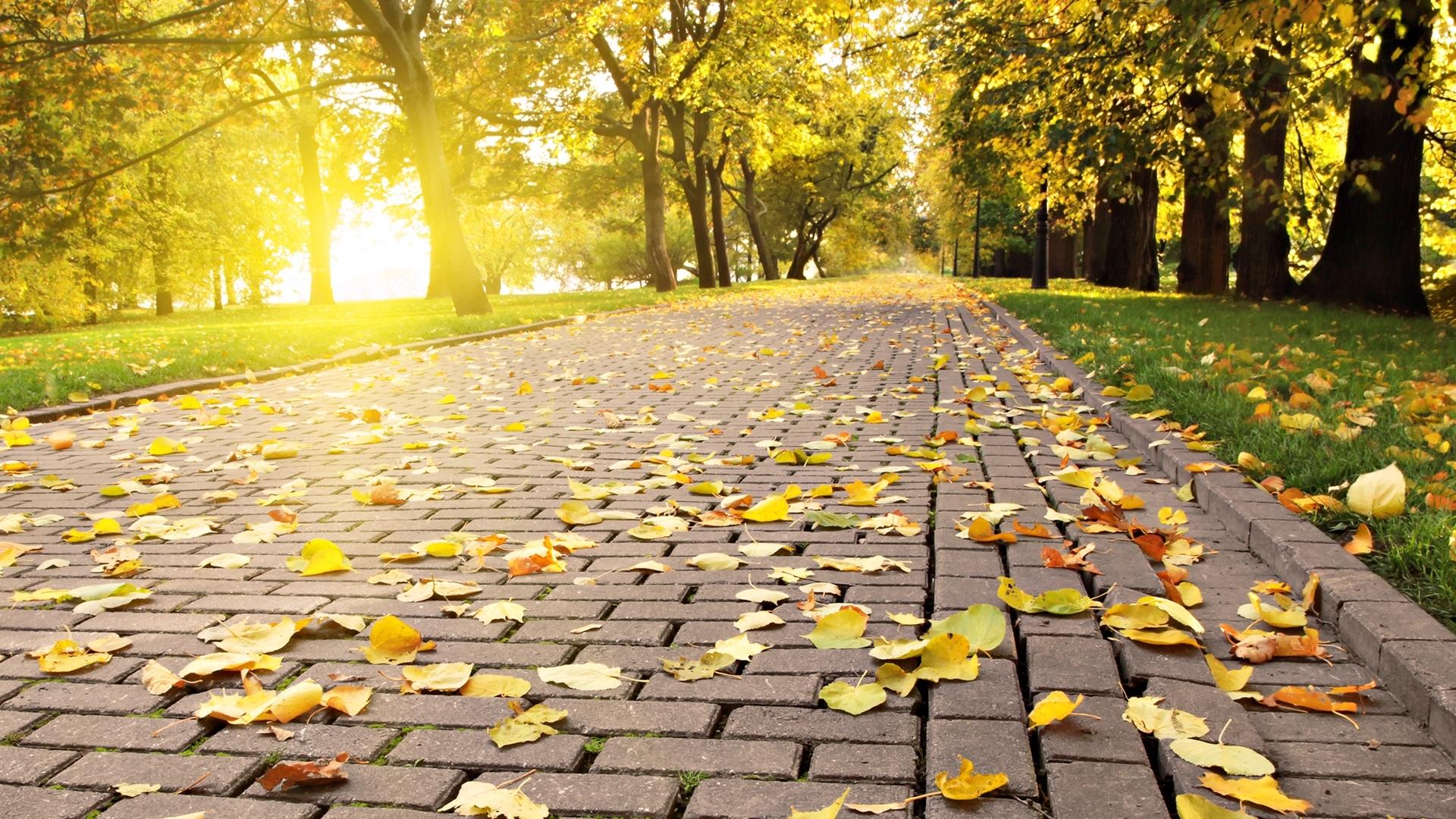 免費壁紙28816:景观, 道路, 秋, 叶 下載手機圖片