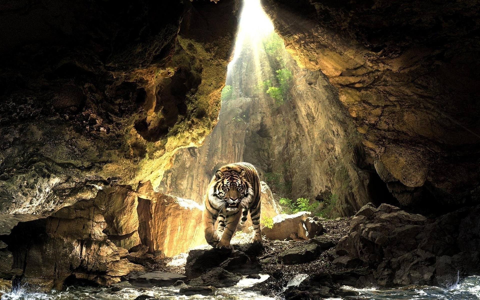 48663 завантажити шпалери Природа, Тигри, Тварини, Пейзаж - заставки і картинки безкоштовно