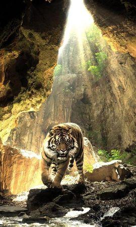 48663 завантажити шпалери Тварини, Пейзаж, Природа, Тигри - заставки і картинки безкоштовно