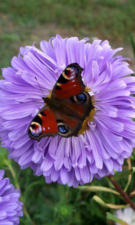 4503 скачать обои Растения, Бабочки, Цветы, Насекомые - заставки и картинки бесплатно