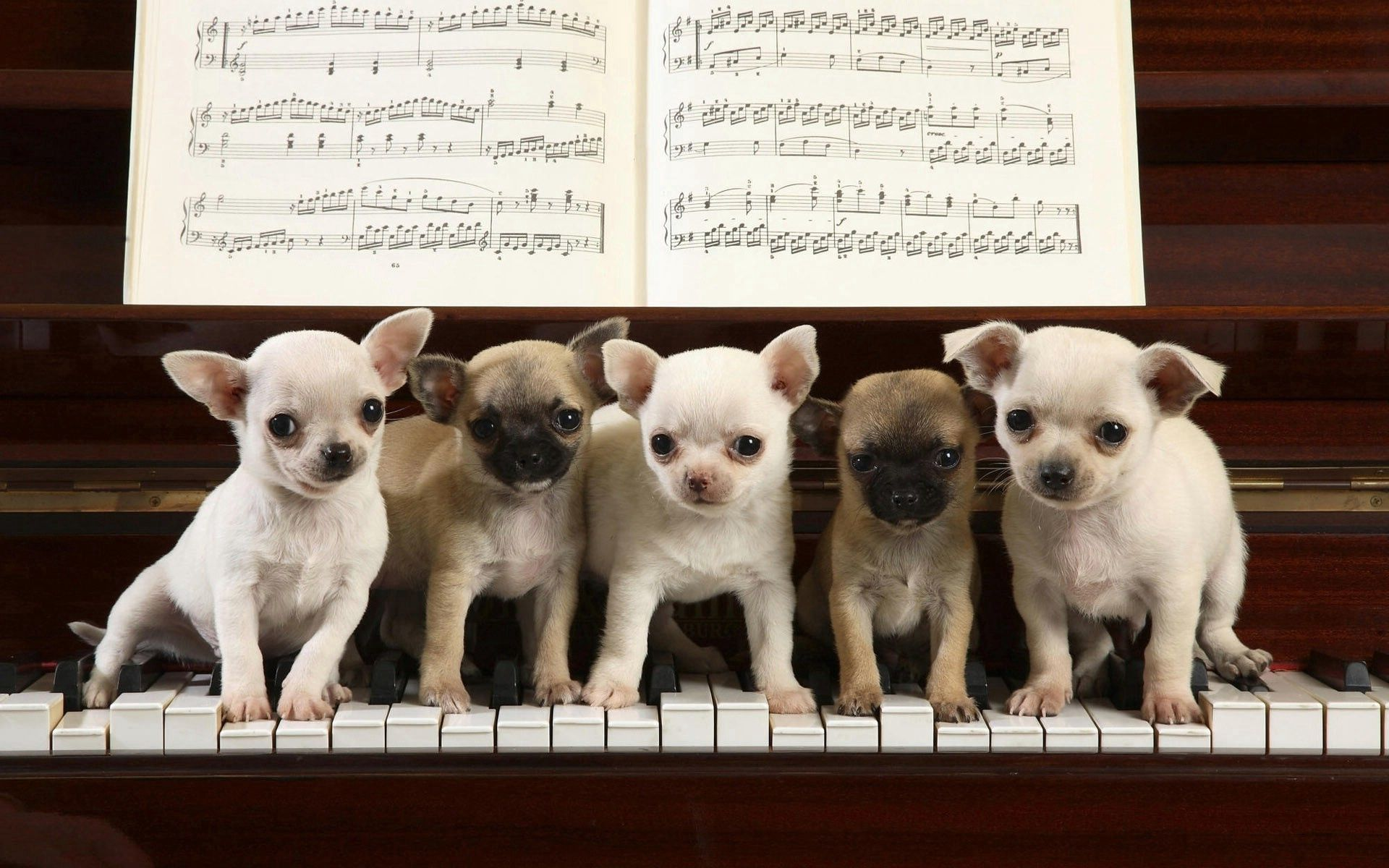 150923 download wallpaper Music, Animals, Piano, Sit, Lot, Notes, Puppies screensavers and pictures for free