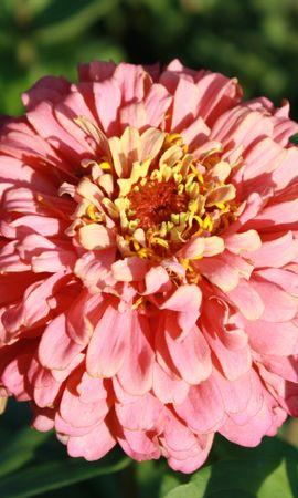 9043 скачать обои Растения, Цветы - заставки и картинки бесплатно