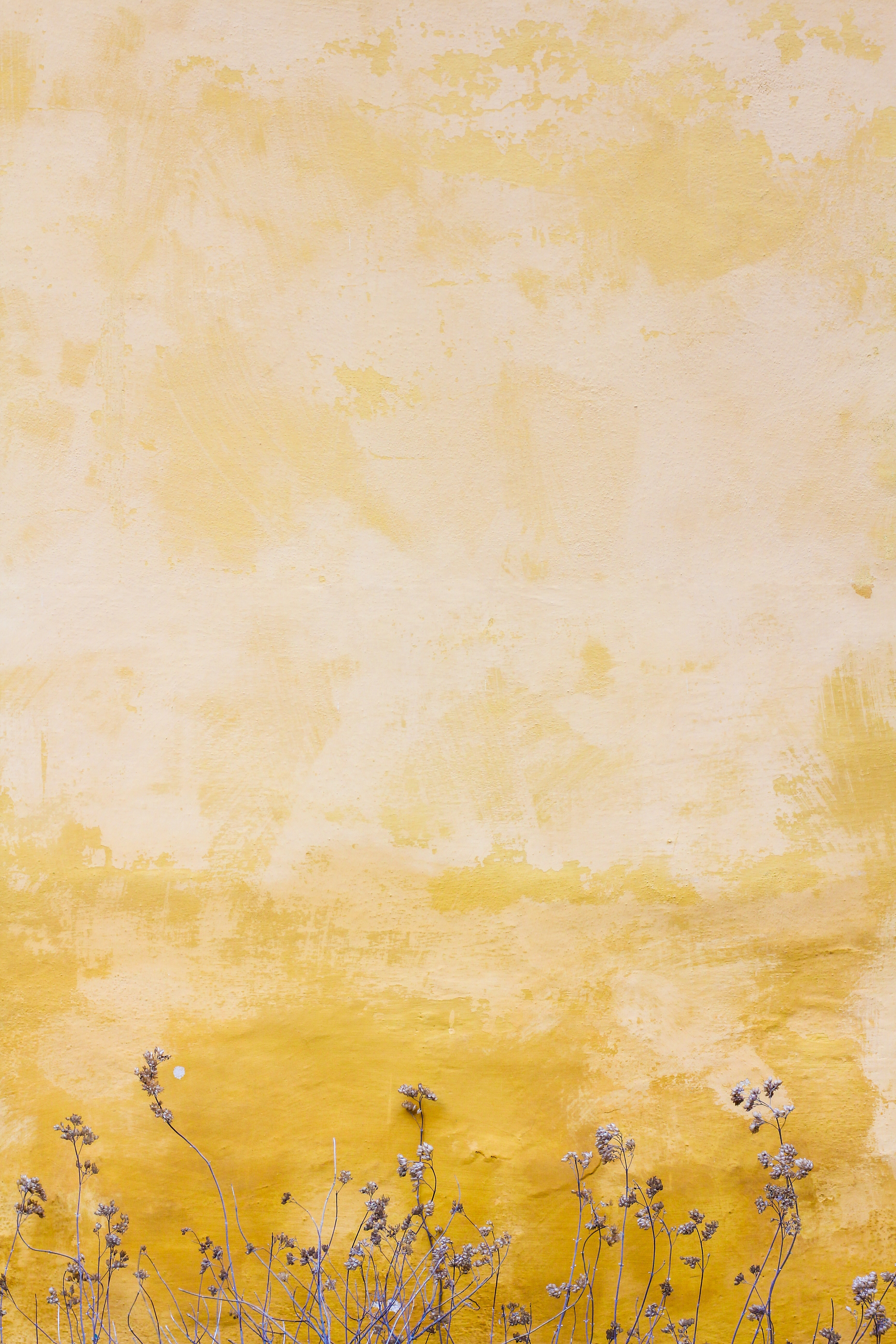 129458 Hintergrundbild herunterladen Pflanzen, Textur, Texturen, Wand, Flecken, Spots - Bildschirmschoner und Bilder kostenlos