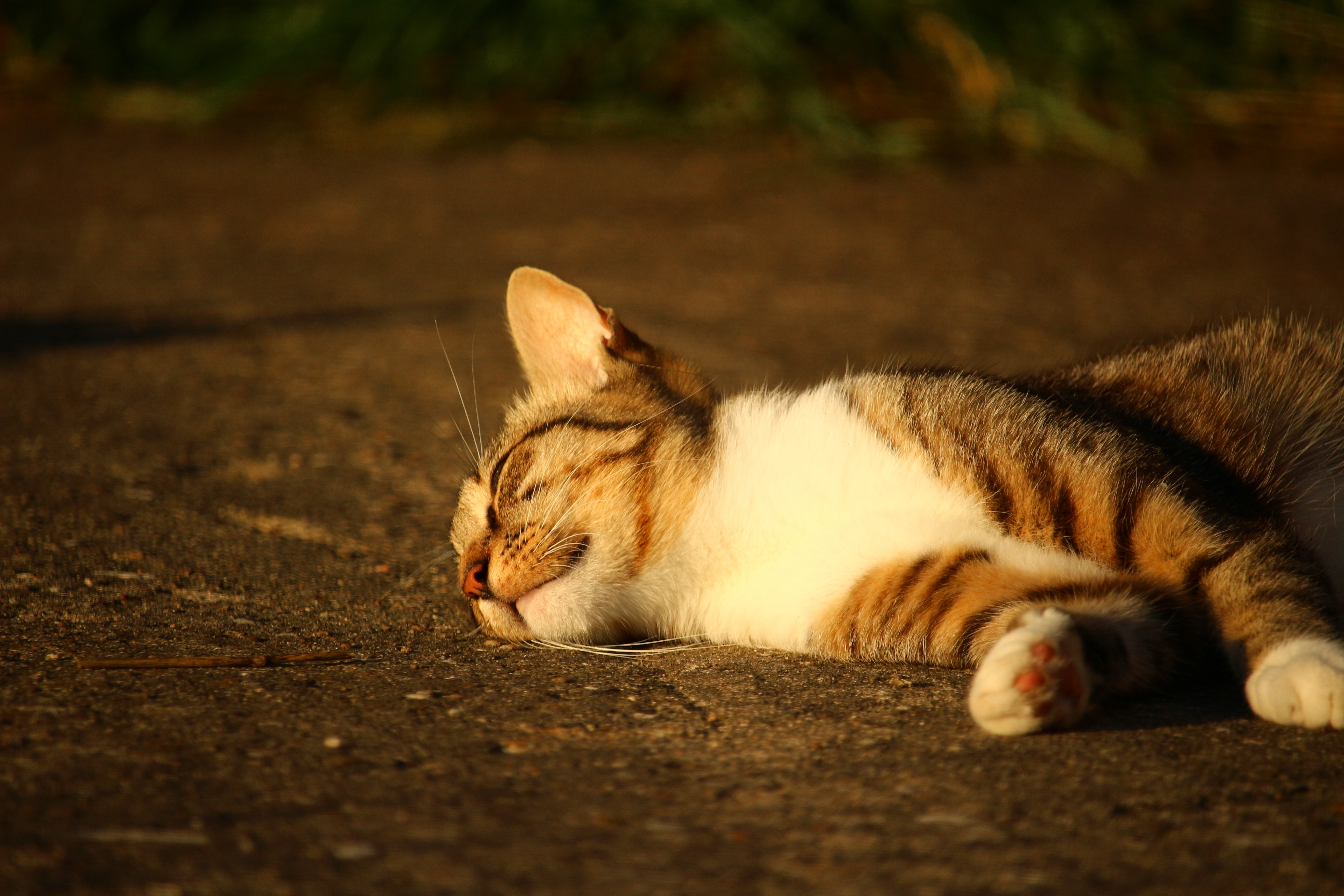 95032 download wallpaper Animals, Cat, Lies, Striped, Sunlight screensavers and pictures for free