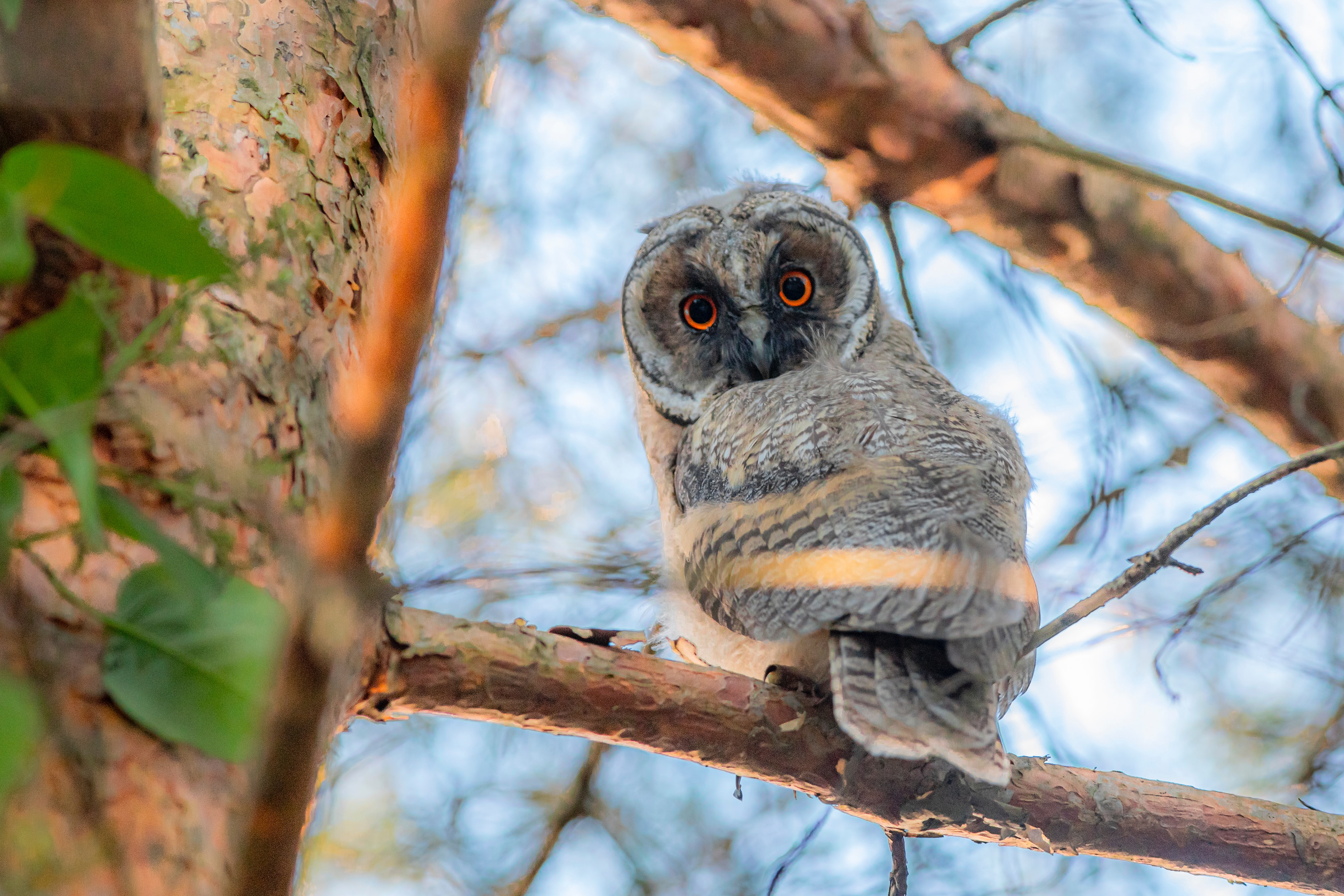 82951 download wallpaper Animals, Owl, Eagle Owl, Bird, Eyes, Sight, Opinion, Branch screensavers and pictures for free