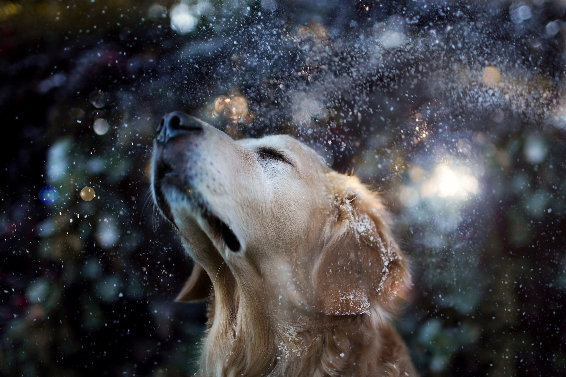 Download mobile wallpaper Animals, Dogs for free.