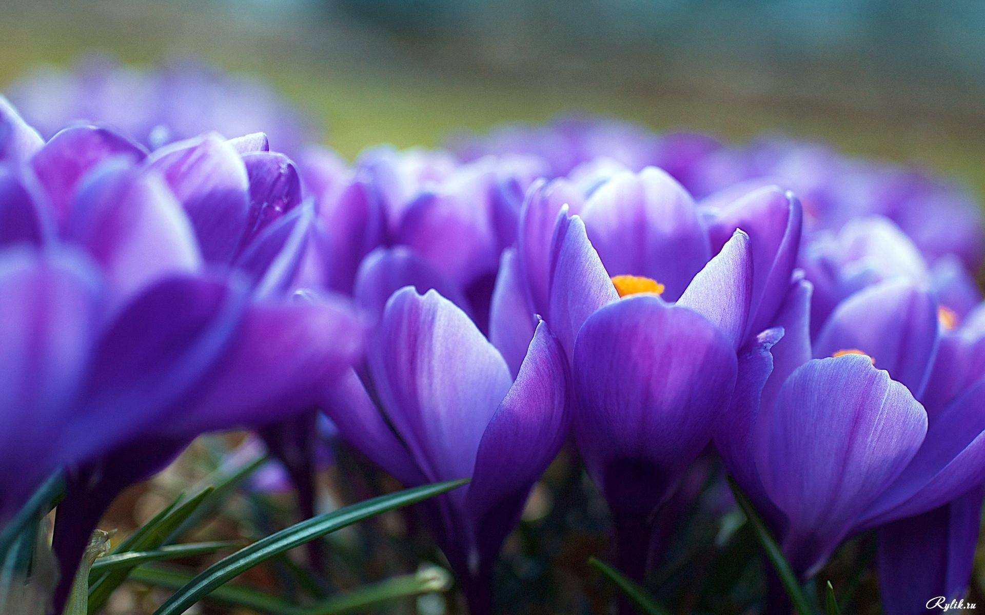 20345 скачать обои Растения, Цветы - заставки и картинки бесплатно