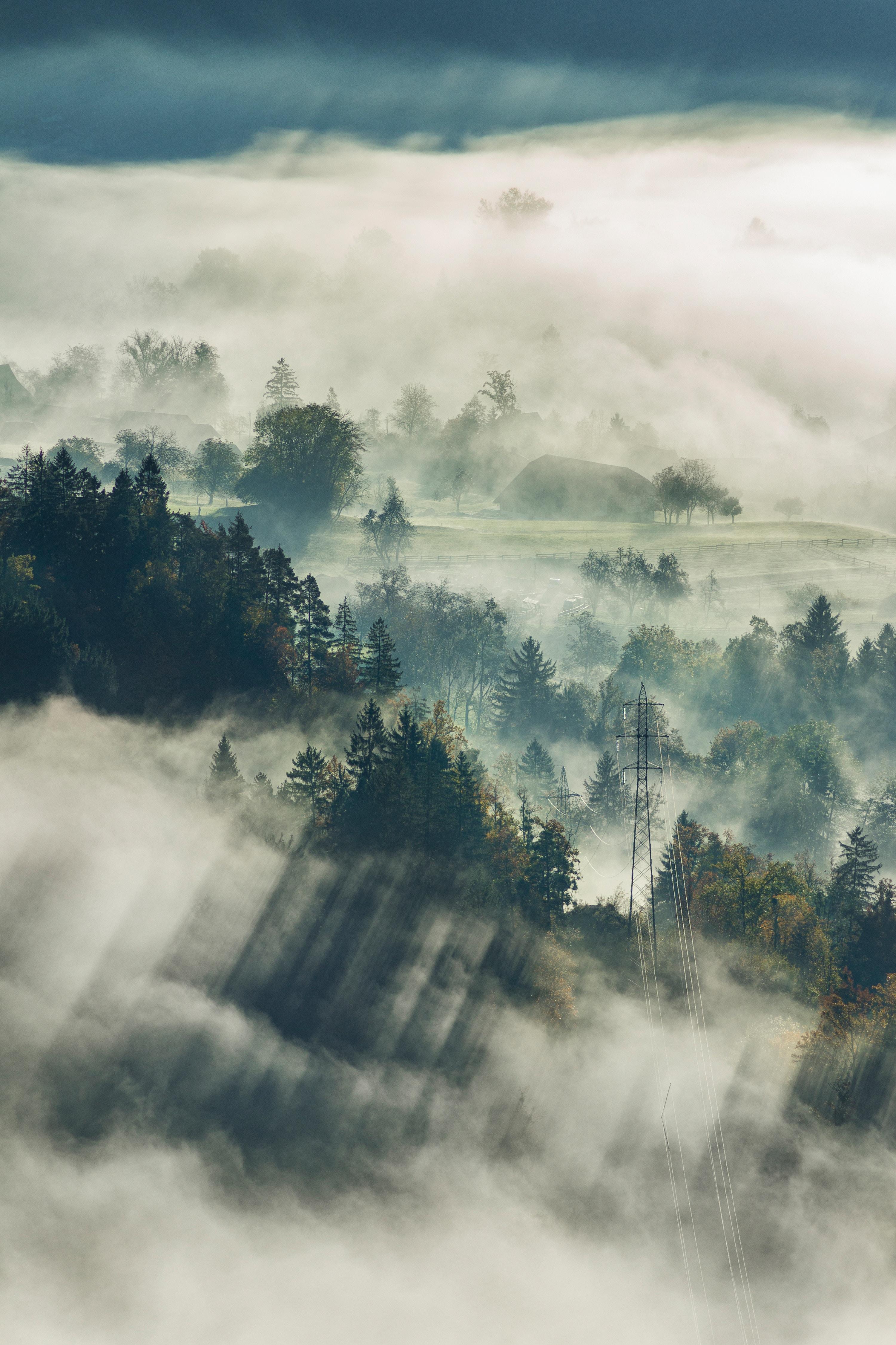 90875 papel de parede 1080x2400 em seu telefone gratuitamente, baixe imagens Natureza, Árvores, Vista De Cima, Ver De Cima, Floresta, Névoa, Nevoeiro, Eslovênia, Sangrado, Sangrou 1080x2400 em seu celular