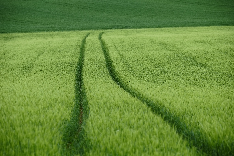 94594 скачать обои Природа, Поле, Следы, Зеленый, Пшеница - заставки и картинки бесплатно