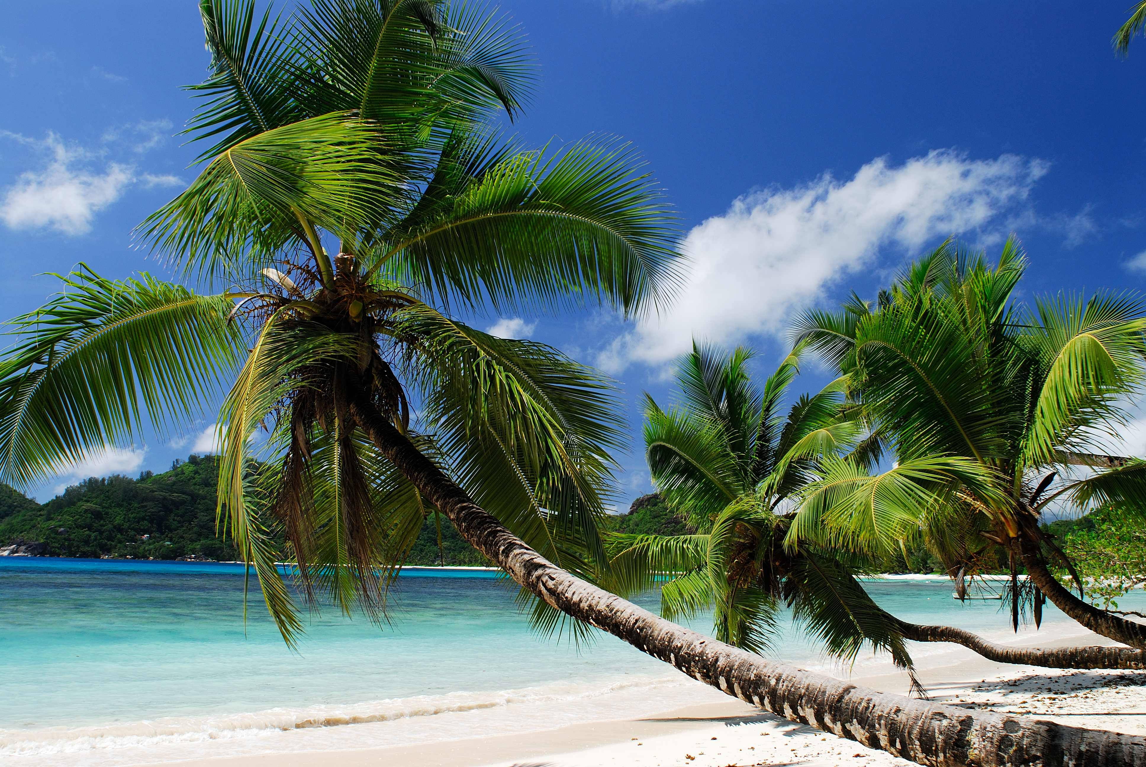 147136 download wallpaper Nature, Beach, Sea, Sand, Palms, Tropics, Sandy screensavers and pictures for free