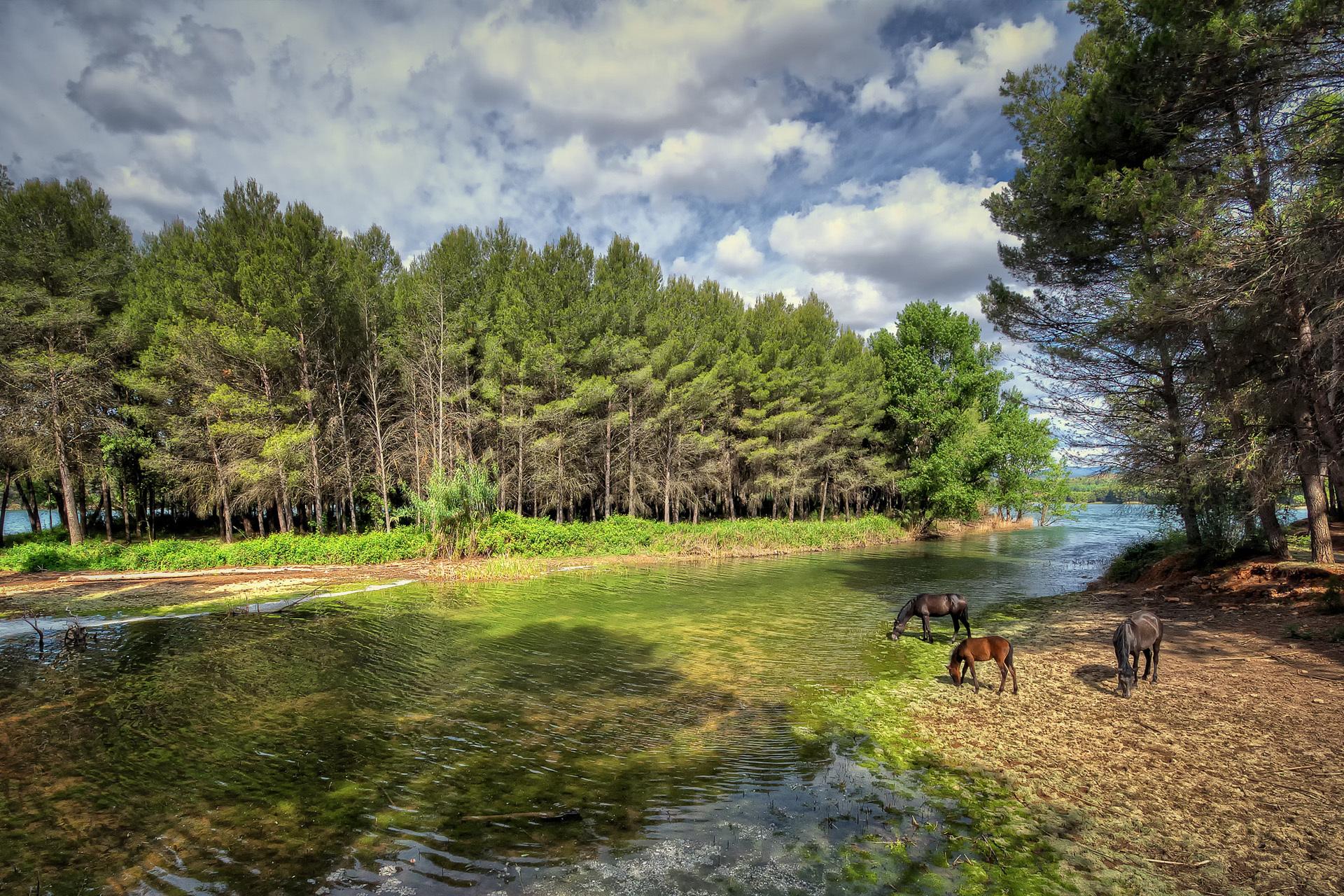 Handy-Wallpaper Tiere, Landschaft, Flüsse, Bäume, Pferde kostenlos herunterladen.