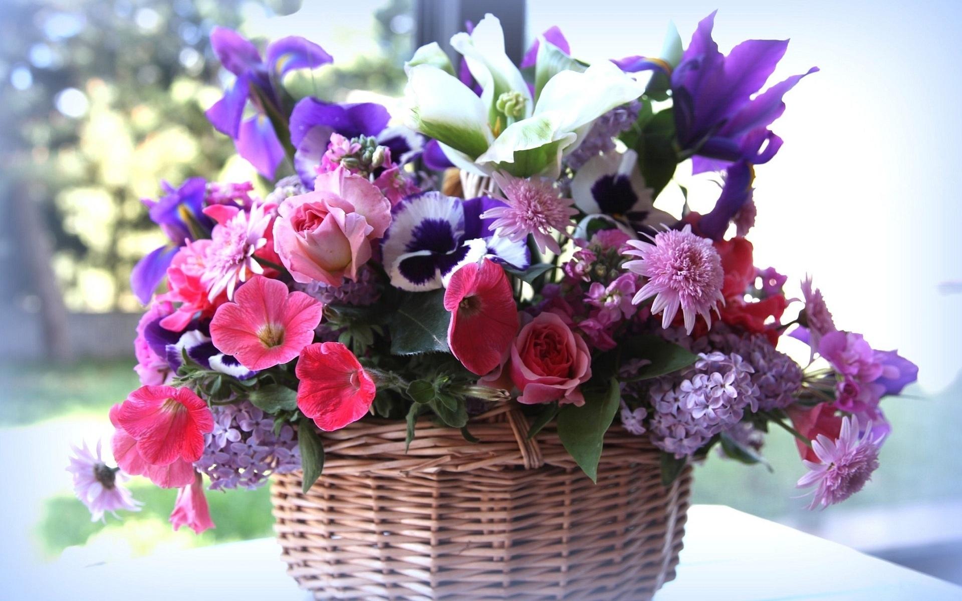 31402 скачать обои Растения, Цветы, Букеты - заставки и картинки бесплатно