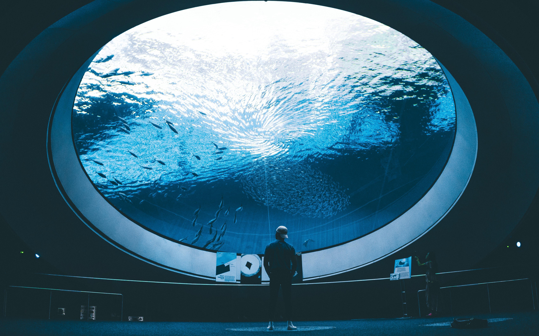 55420 Screensavers and Wallpapers Aquarium for phone. Download Water, Miscellanea, Miscellaneous, Premises, Room, Human, Person, Aquarium, Fish pictures for free