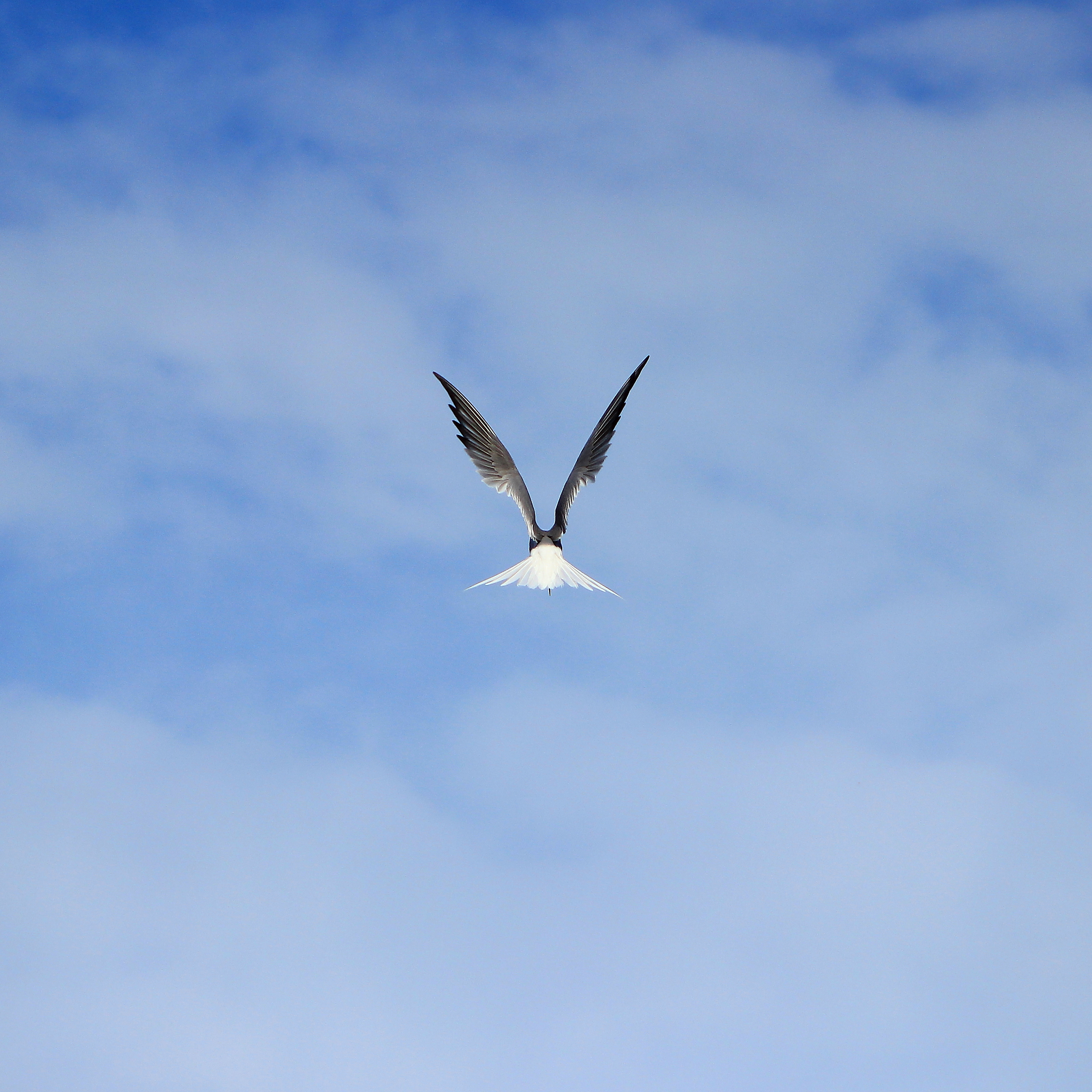 153266 download wallpaper Animals, Gull, Seagull, Bird, Wings, Sky, Flight screensavers and pictures for free