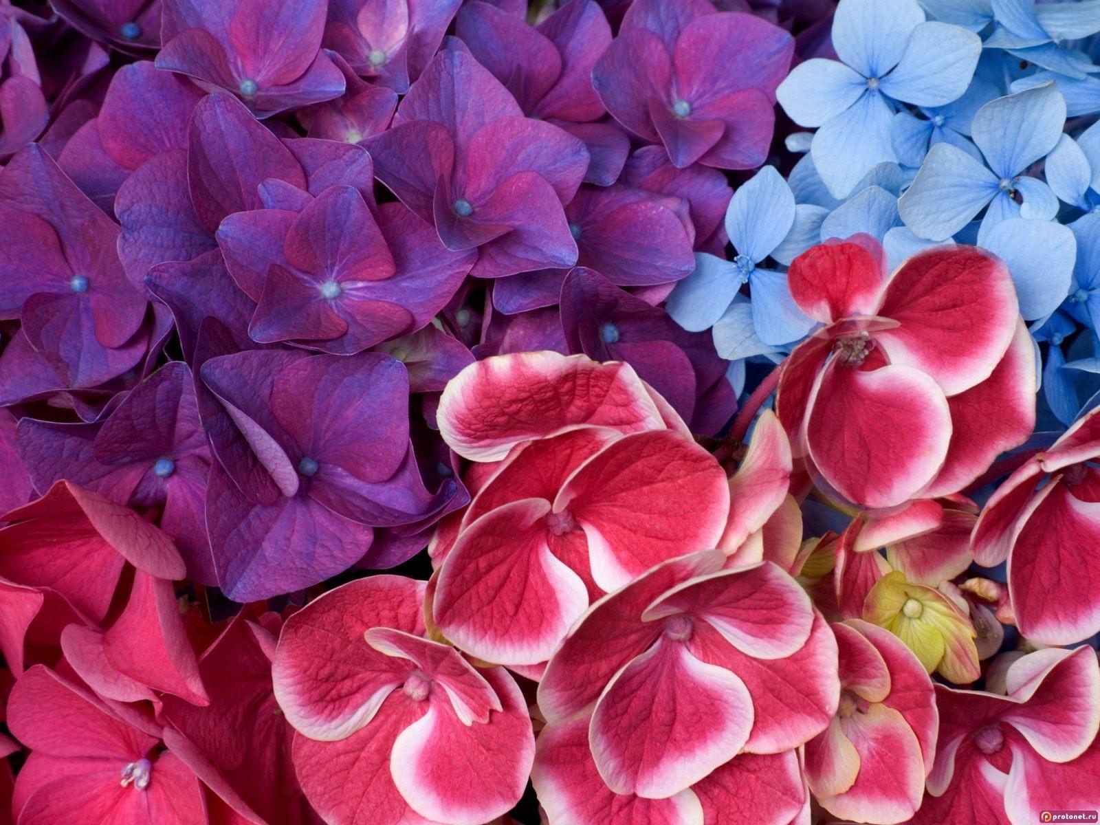3539 скачать обои Растения, Цветы, Фон - заставки и картинки бесплатно