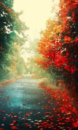 25704 скачать обои Пейзаж, Дороги, Осень - заставки и картинки бесплатно
