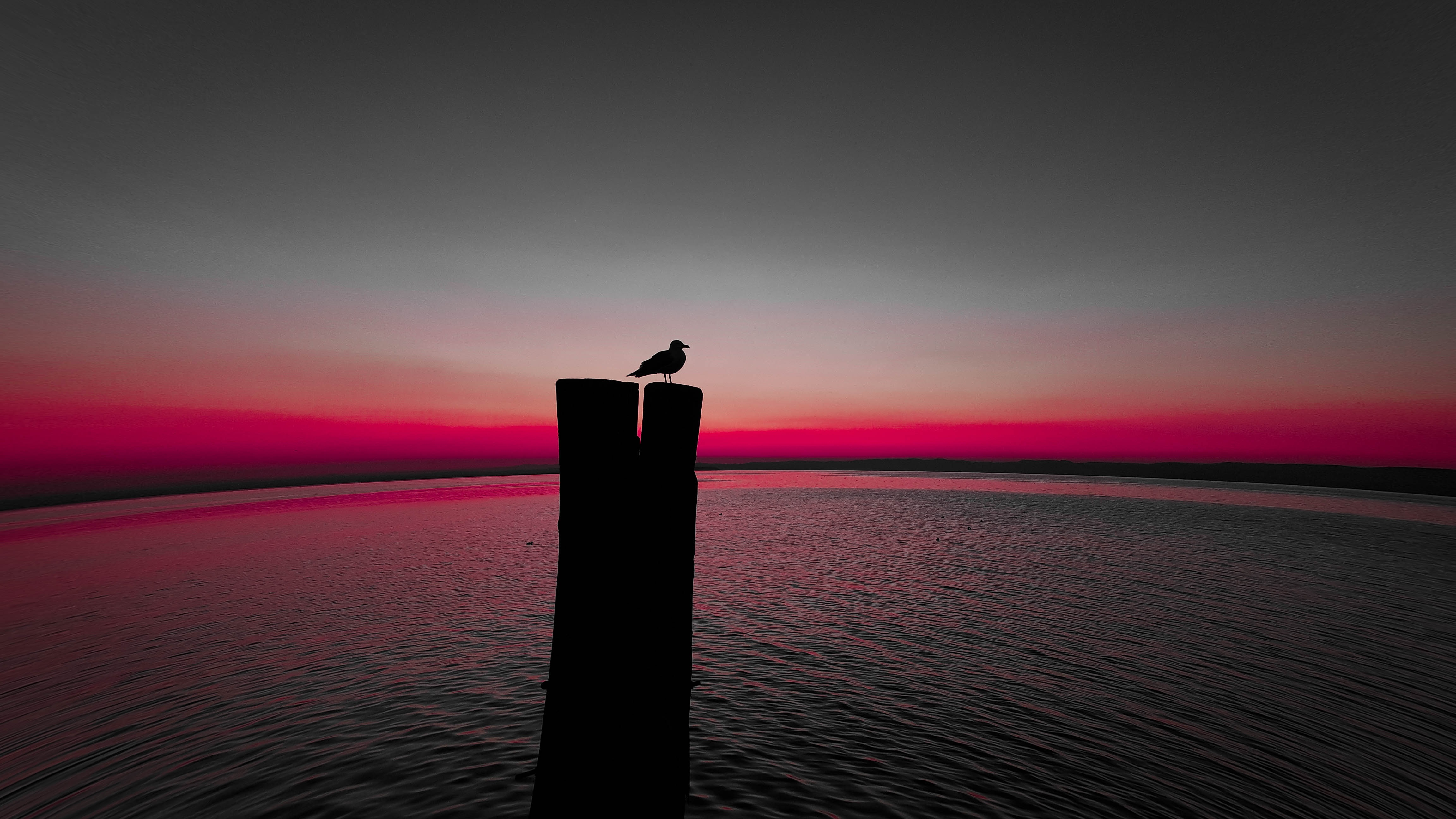 84310 download wallpaper Animals, Sea, Horizon, Silhouette, Bird, Pillar, Post, Gull, Seagull screensavers and pictures for free