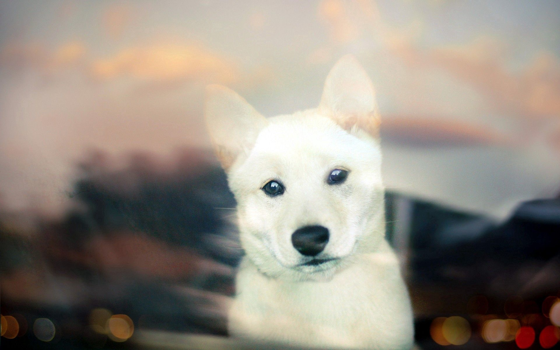 121366 download wallpaper Animals, Dog, Muzzle, Glass, Peek Out, Look Out screensavers and pictures for free