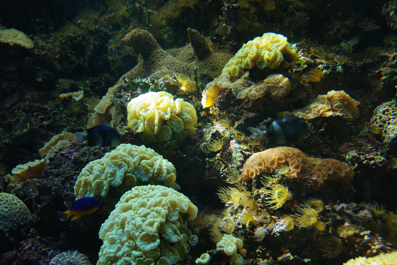 157634 download wallpaper Nature, Seaweed, Algae, Aquarium, Fishes, Coral screensavers and pictures for free