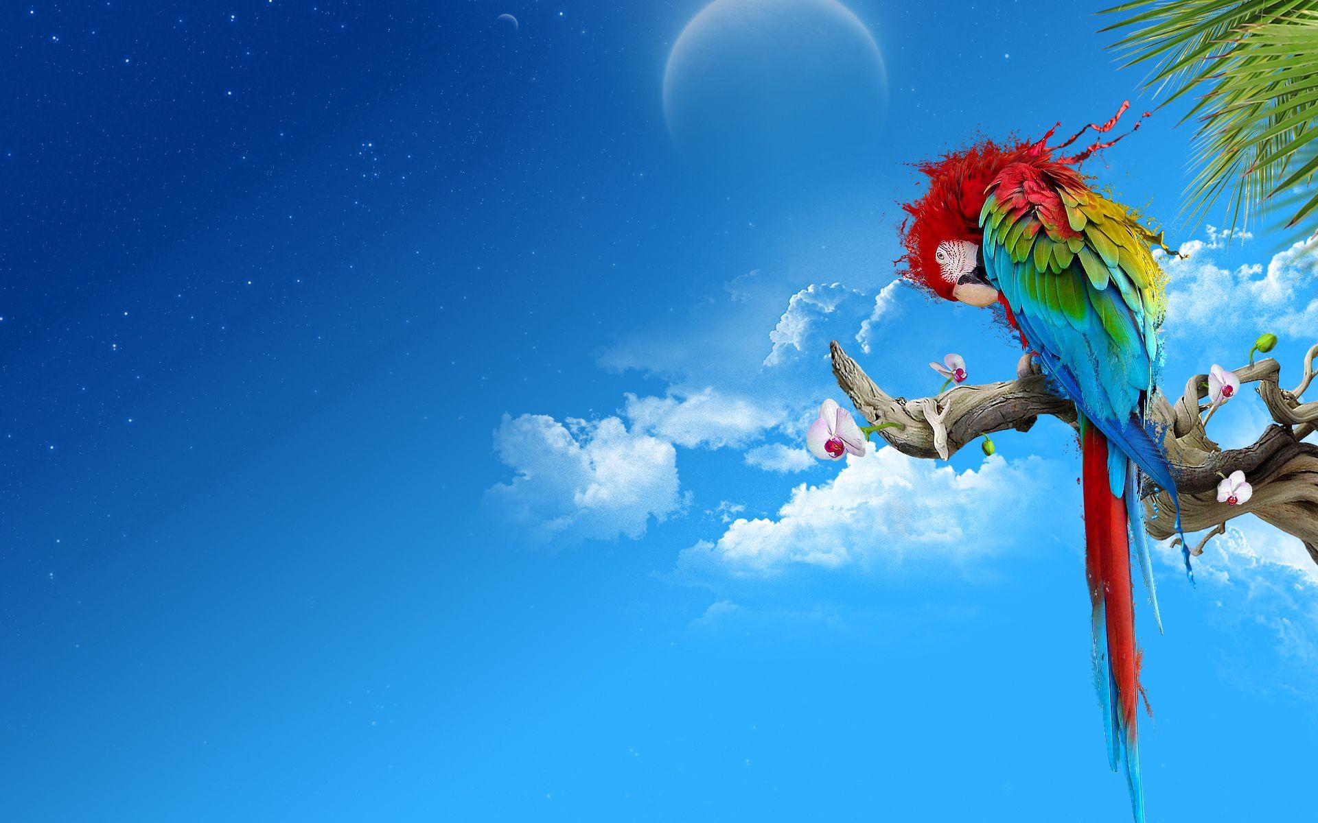 67174 économiseurs d'écran et fonds d'écran Perroquets sur votre téléphone. Téléchargez Art, Perroquets, Plumes, Asseoir, S'Asseoir, Multicolore, Hétéroclite, Branche images gratuitement