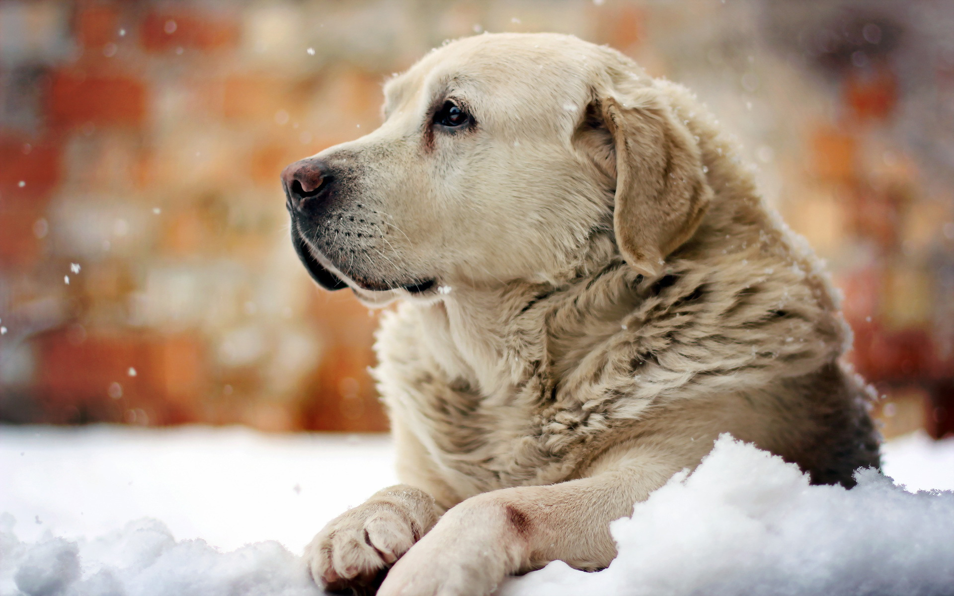 50222 download wallpaper Animals, Dogs screensavers and pictures for free