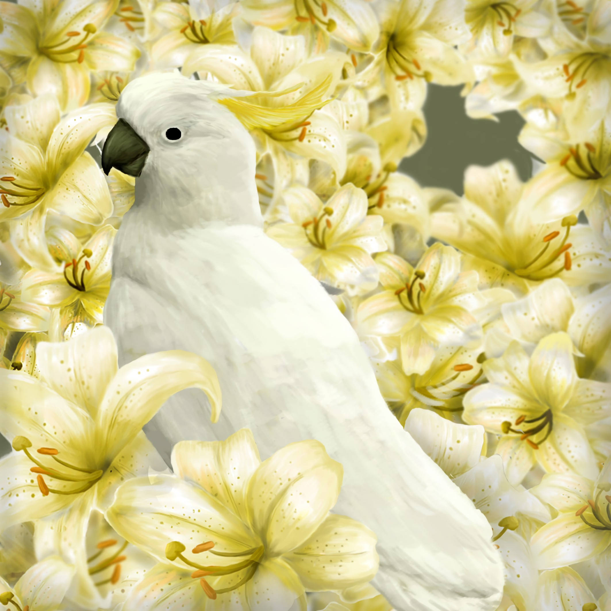 148174 download wallpaper Art, Parrots, Lilies, Bird screensavers and pictures for free