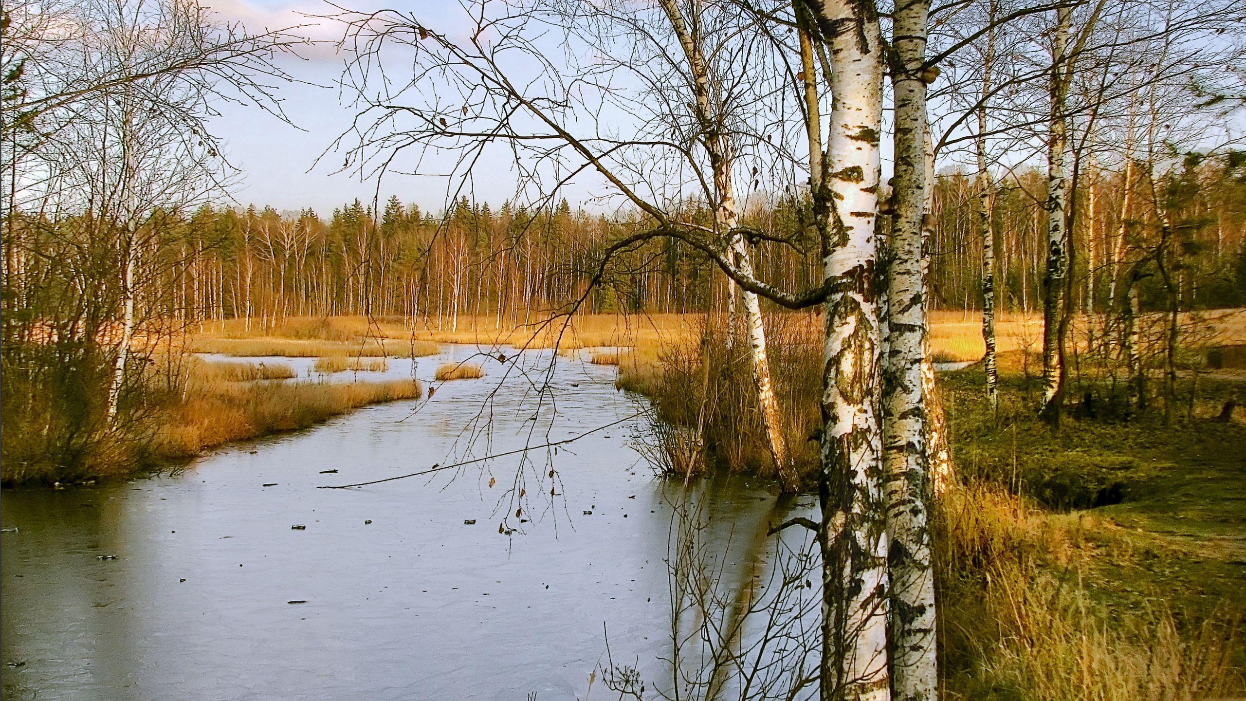 132890 скачать обои Река, Пейзаж, Природа, Осень, Березы - заставки и картинки бесплатно