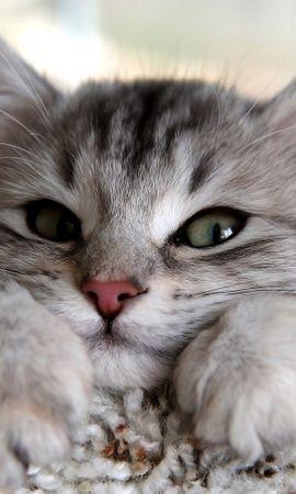 42066 скачать обои Животные, Кошки (Коты, Котики) - заставки и картинки бесплатно