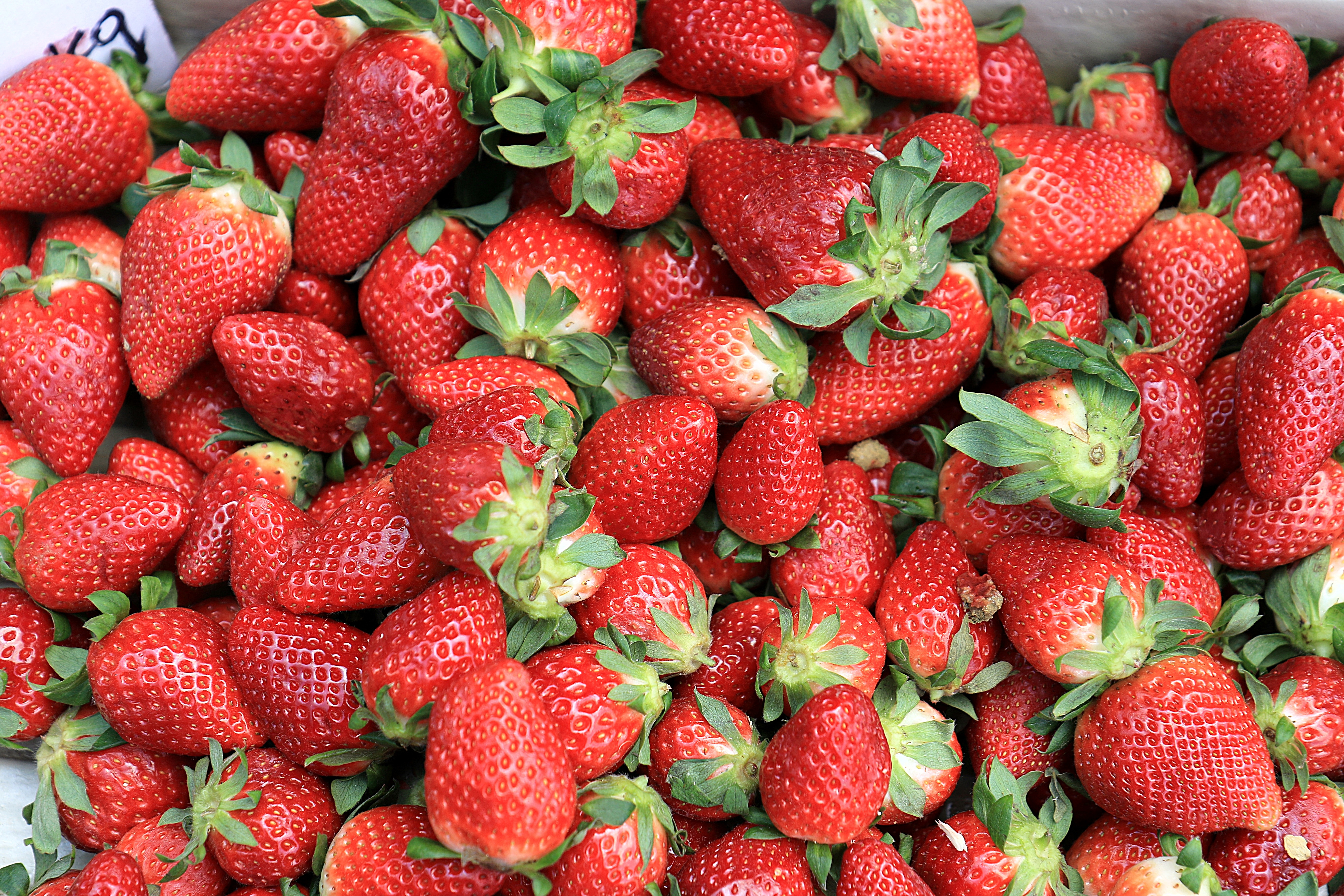 76140 download wallpaper Food, Strawberry, Berries, Ripe screensavers and pictures for free