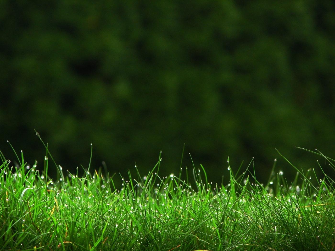43941 скачать обои Растения, Пейзаж, Трава - заставки и картинки бесплатно