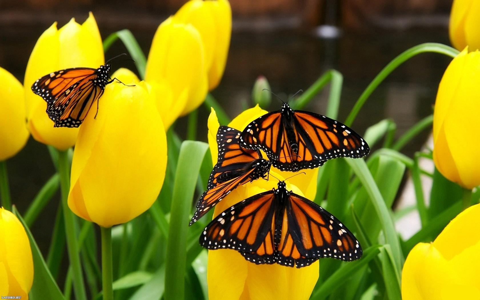 42104 скачать обои Растения, Бабочки, Цветы - заставки и картинки бесплатно