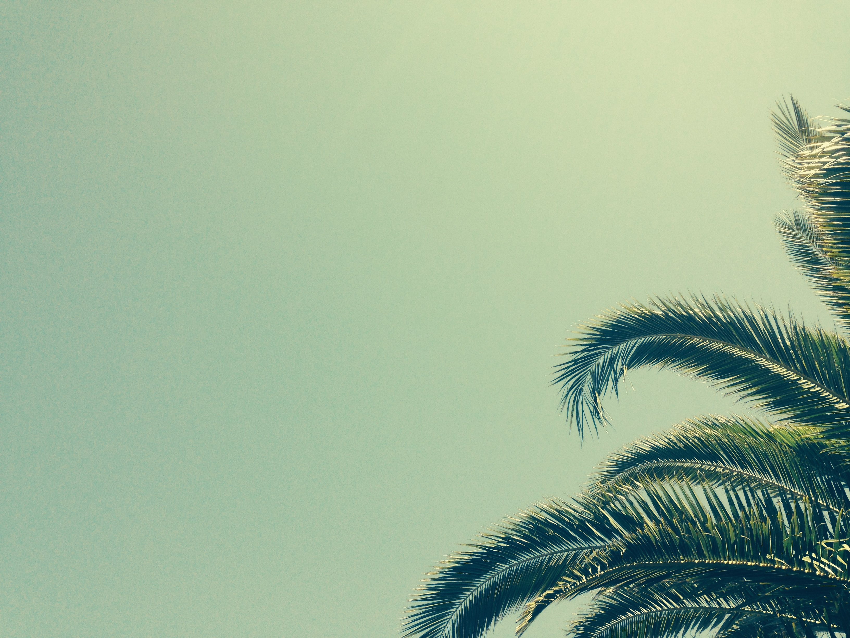 80565 download wallpaper Wood, Tree, Minimalism, Palm, Branches, Tropics screensavers and pictures for free
