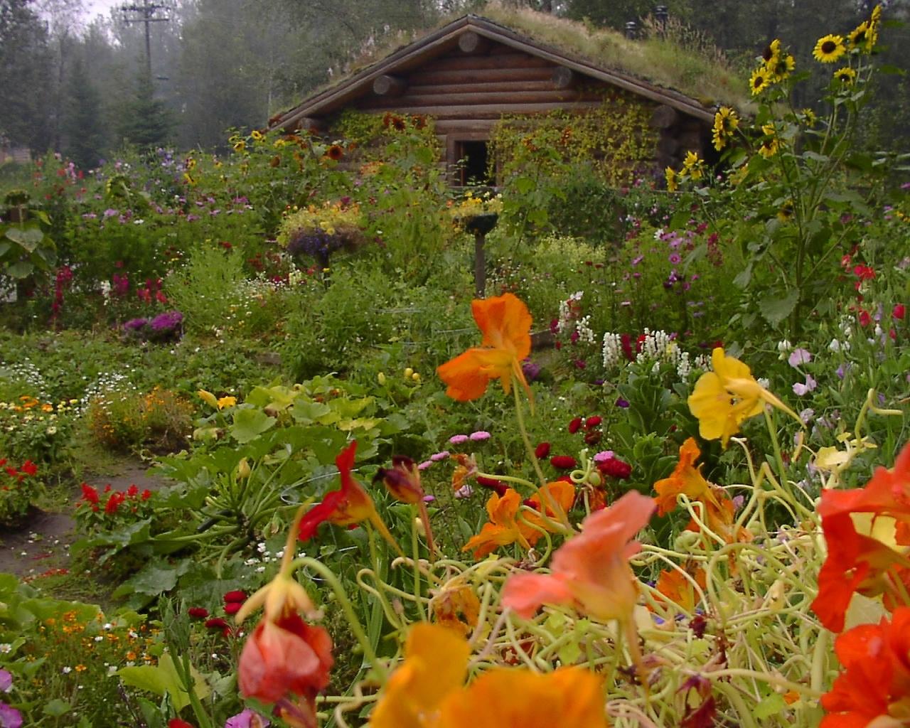 5302 скачать обои Пейзаж, Цветы, Дома - заставки и картинки бесплатно