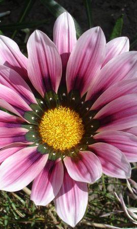 6669 скачать обои Растения, Цветы - заставки и картинки бесплатно