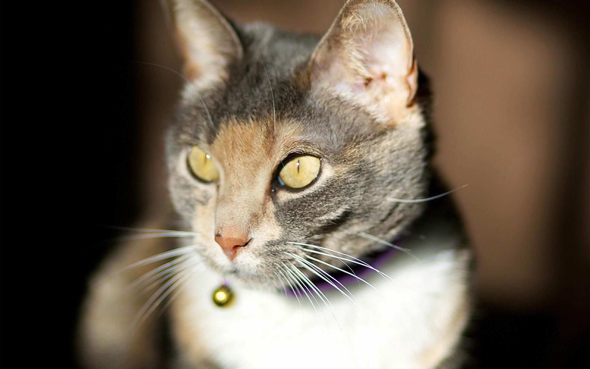 24700 скачать обои Животные, Кошки (Коты, Котики) - заставки и картинки бесплатно